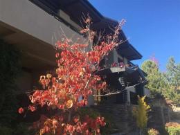 60 Hawken Road, Reno, NV 89519