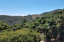 Carmel Valley Village Country Retreat