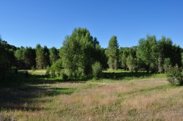Twenty Acres of Privacy and No CCR''s