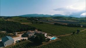 Vineyard, Provencal Drôme